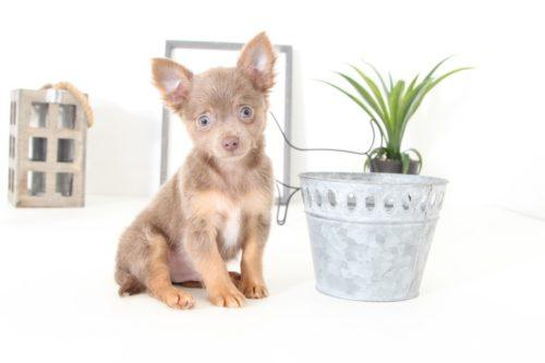 Puppies for Sale in Florida and Nationwide | Puppies Online